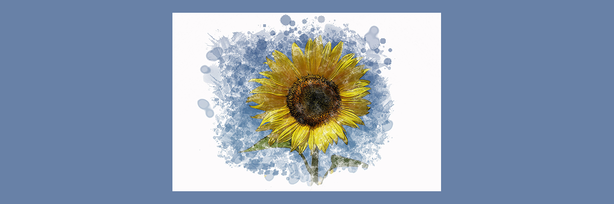 water color sunflower on a blue background